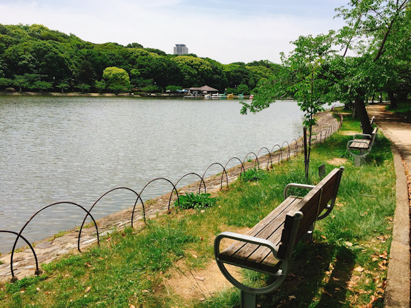 剛ノ池周辺のベンチ