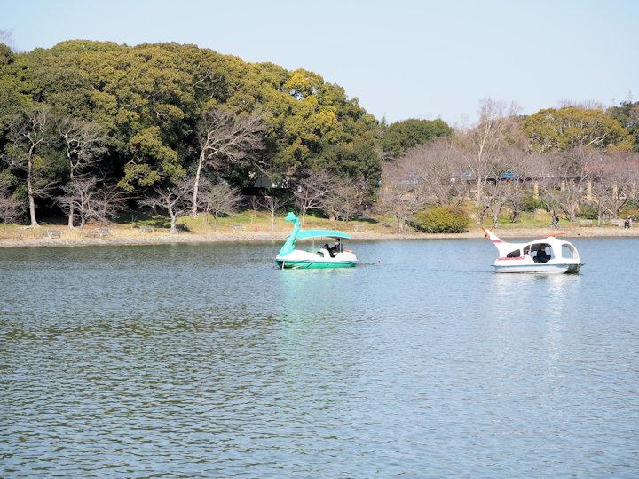 明石公園・剛ノ池のボートが3月19日まで平日休業になります