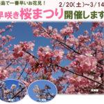 【淡路島】国営明石海峡公園で「早咲き桜まつり」開催!ちょっと早めのお花見が楽しめる