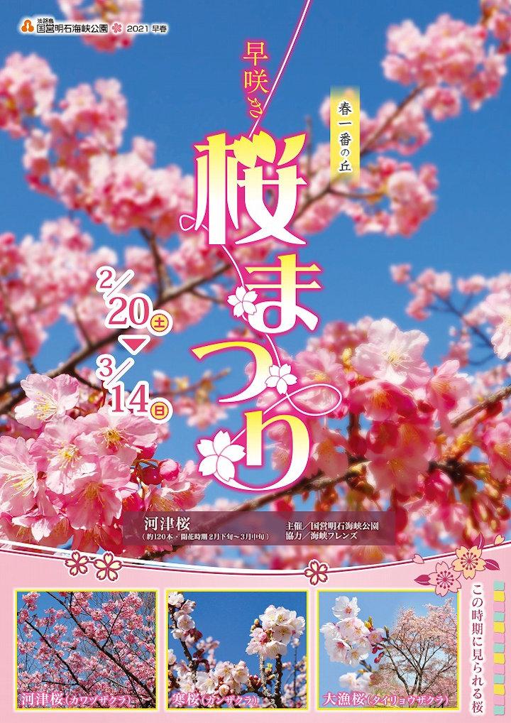 早咲き桜まつり