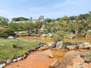 明石公園・武蔵の庭園の乙女池を覆う外来種「オオフサモ」が除去されてスッキリ