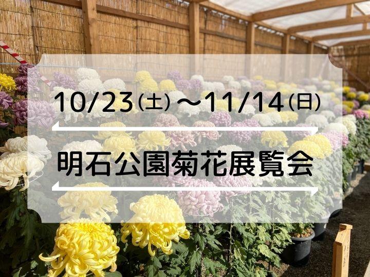 今年も菊の季節がやってきました!「第93回 明石公園菊花展覧会」10/23~11/14(2021年)