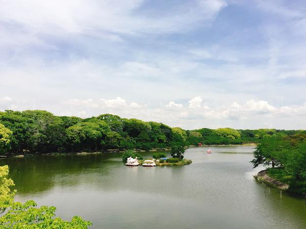 屋上から見る剛の池