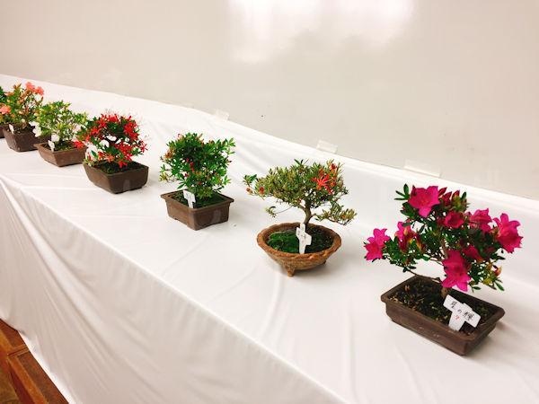 小さな盆栽もあります