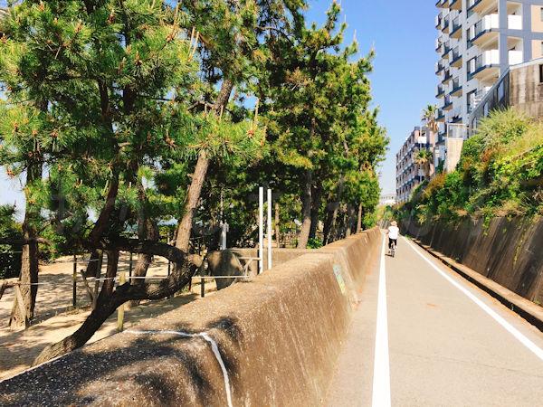 松林沿いのサイクリングロード