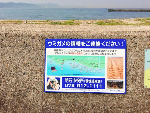 ウミガメもやってくる海岸線
