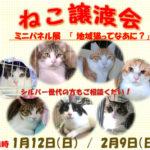 あかし動物センター多目的ホールで猫の譲渡会