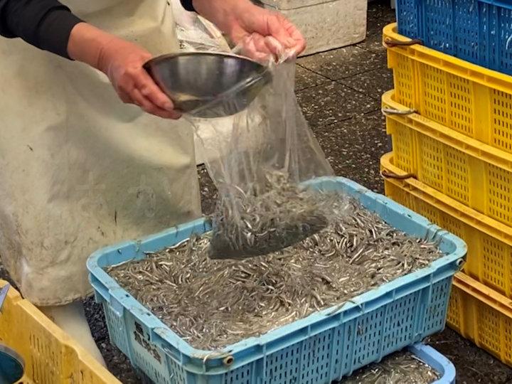 魚の棚商店街のいかなごシンコ