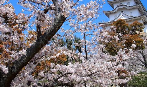 明石公園(明石城)の桜お花見スポット!穴場の場所は?場所取りは必要?