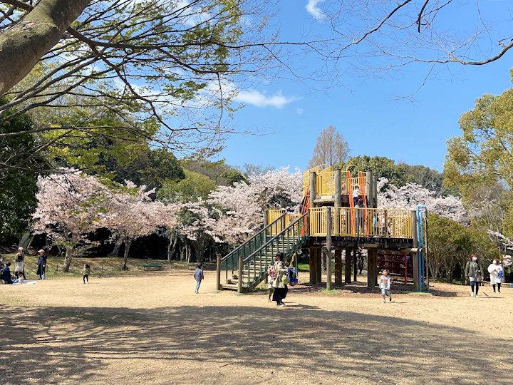 子どもの村のすべり台と桜(明石公園)
