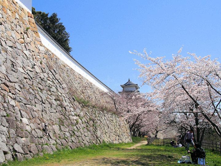 坤櫓・巽櫓の下で花見(明石公園)