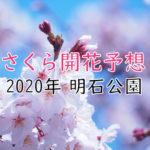 【2020年】明石公園(明石市)の桜開花予想は?満開の時期はいつ頃?