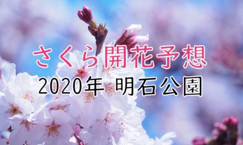 2020年明石公園の桜開花予想