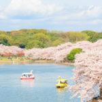 【2020年】明石公園の桜開花情報