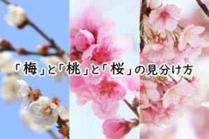 梅・桃・桜の見分け方