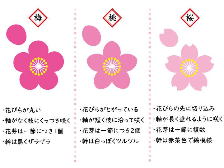 春の花の見分け方まとめ