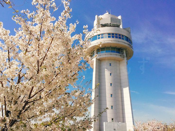 天文科学館と桜