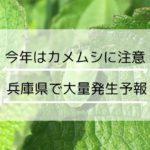 兵庫県でカメムシが大量発生の予報