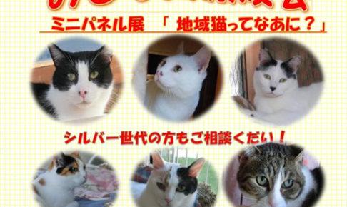 「おとな猫譲渡会」があかし動物センター