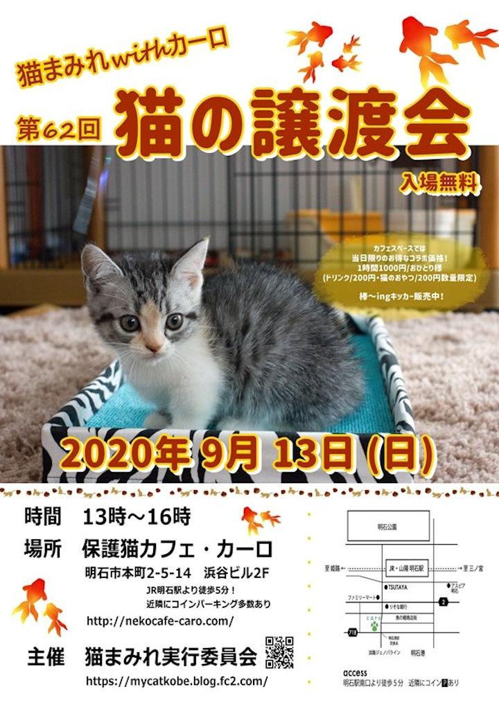 保護猫カフェ「カーロ」で猫の譲渡会