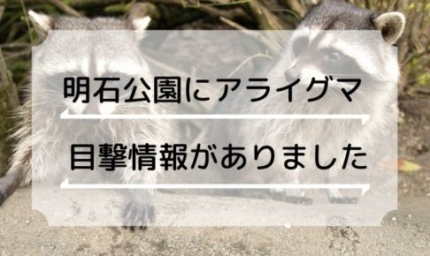 明石公園でアライグマが目撃されたようです