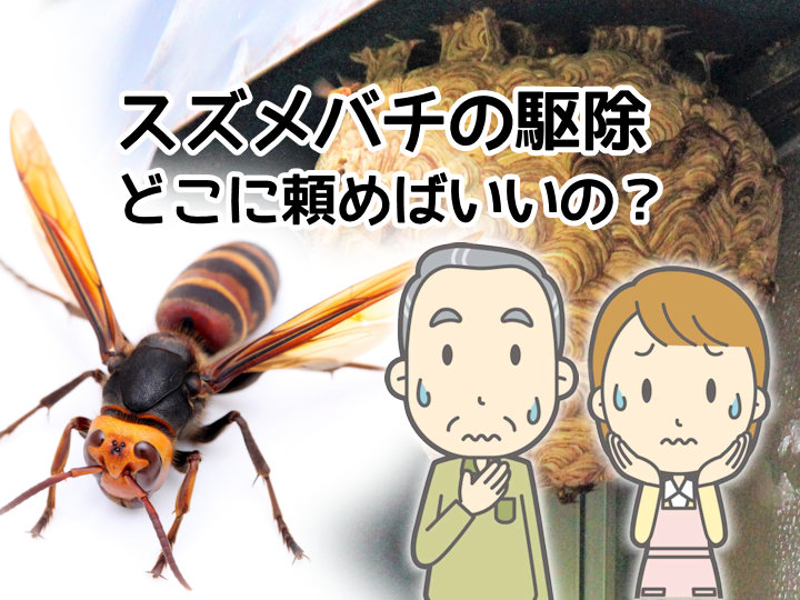 明石市でスズメバチ・蜂の巣を駆除する方法!補助金はある?どこの業者に頼めばいい?