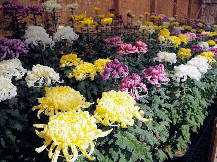 三本立花壇