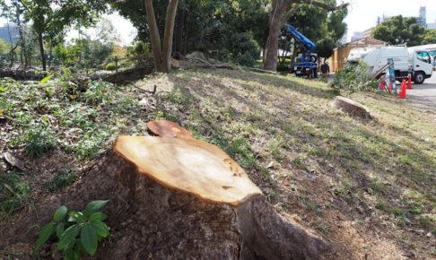 明石公園のひぐらし池の樹林を伐採・剪定