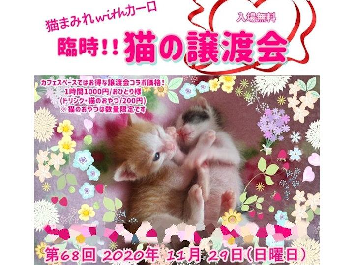 臨時開催!保護猫カフェ「カーロ」で猫の譲渡会
